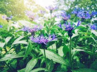 fleurs qui poussent en altitude montagne froid