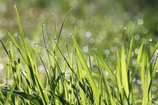 gazon pelouse ete