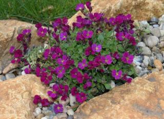 idee caillou paillage jardin sans entretien