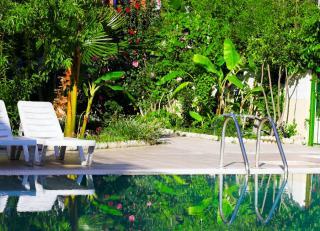 idee plante tropicale piscine ambiance