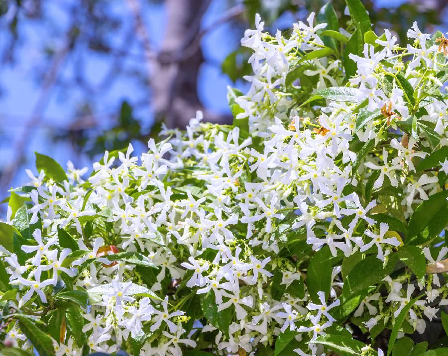 liste de fleurs pafumees