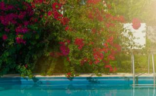 plante mediterranee piscine