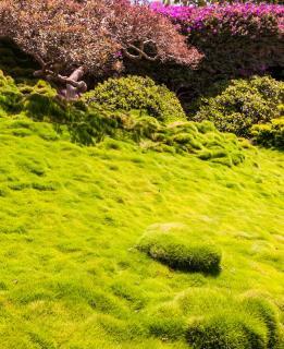 plante pour remplacer pelouse au soleil