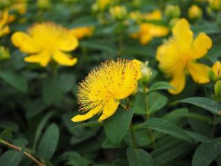 plante qui resiste au vent sec chaud