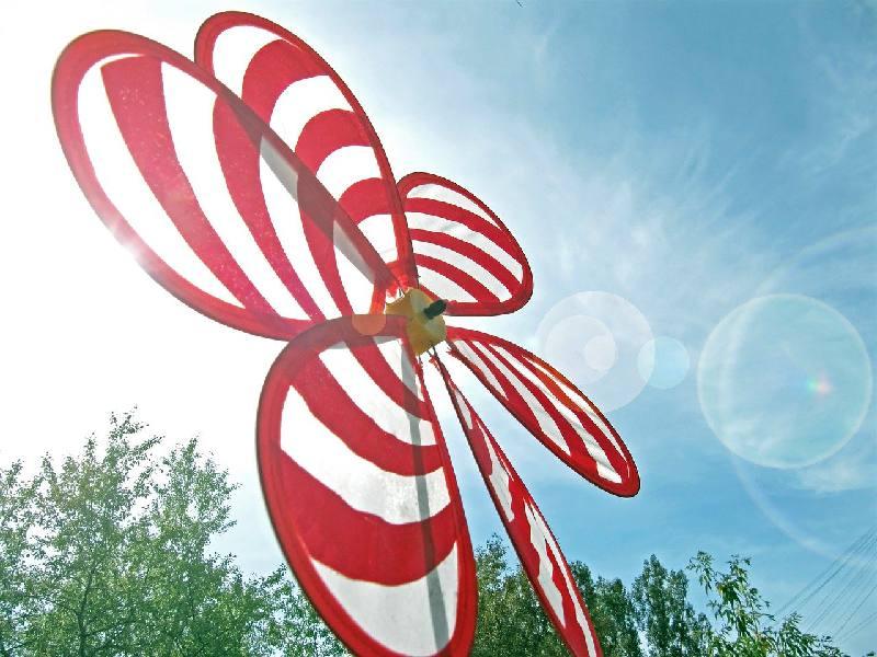 plante qui supporte le vent