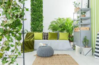 plantes pour jardin hiver interieur serre