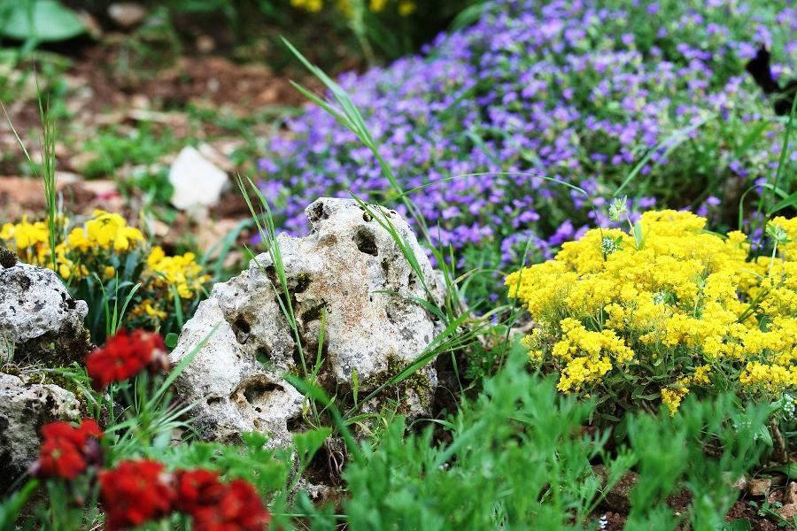 plantes pour rocaille idee amenagement
