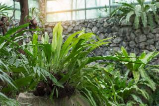 plantes pour veranda