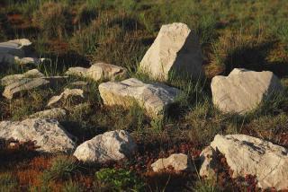 rocaille avec pierre plantes