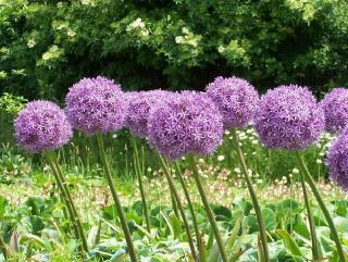 ail ornement fleur