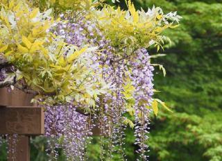 fleurs ne donnant pas allergie hypoallergenique