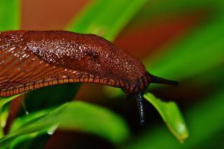 marc de cafe repulsif insectes