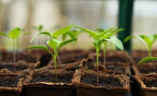 marc de cafe semis terreau