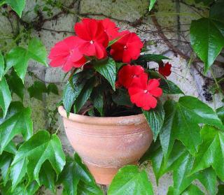 plante fleur pour jardiniere pot ombre