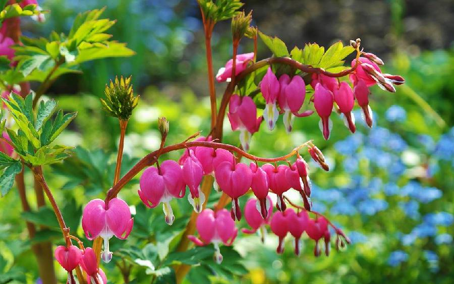 plante vivace fleur par saison