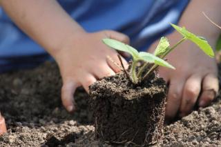 utilisation compost