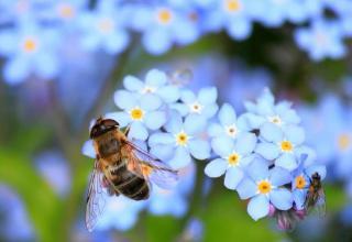 utilite des Insectes au jardin