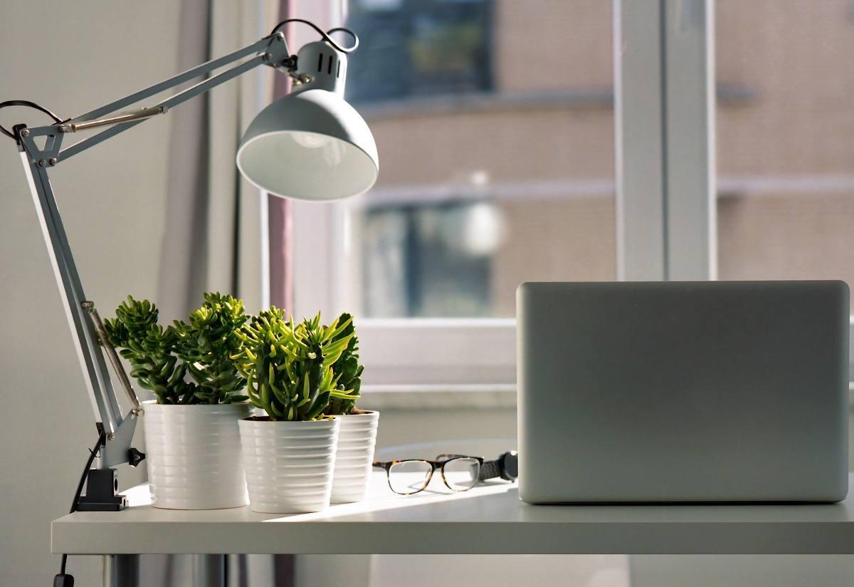 Plante pour bureau ideal