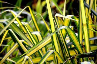 Plantes pour bureau sans lumiere