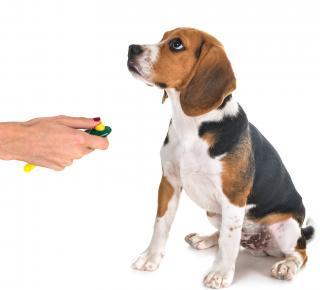 clicker chien