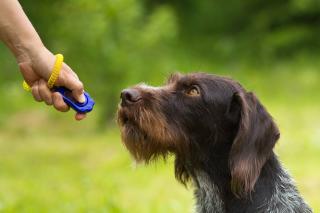 dressage chien avec un clic clicker