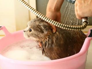 laver chat bain baignoire