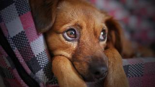 notion du temps chez le chien