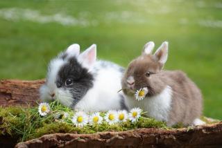 nourriture lapin jardin