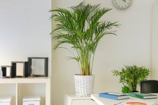plante qui assainit air bureau depolluante