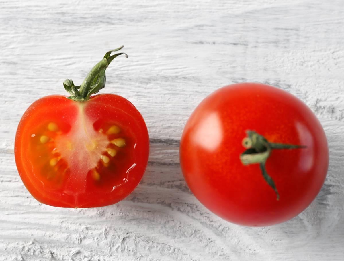 Recolte graine tomate