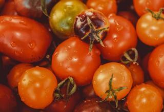 Tomate Torino lycopène