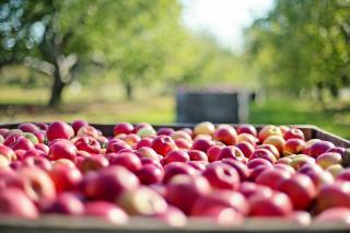 comment stocker conserver pomme hiver