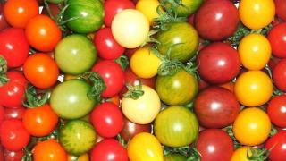faire murir tomate cerise