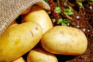 savoir quand recolter la pomme de terre