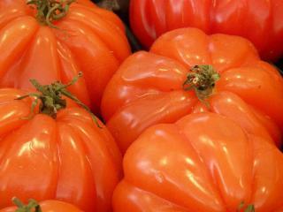 variete Tomate sans pepin