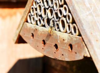 cabane a insecte - abeille maconne - osmie
