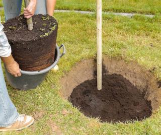 comment planter un arbre arbuste