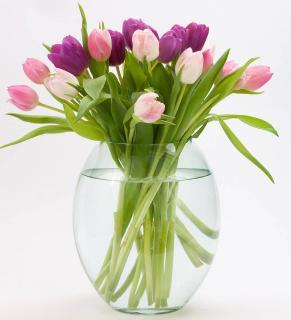 couper bout tige tulipe bouquet vase