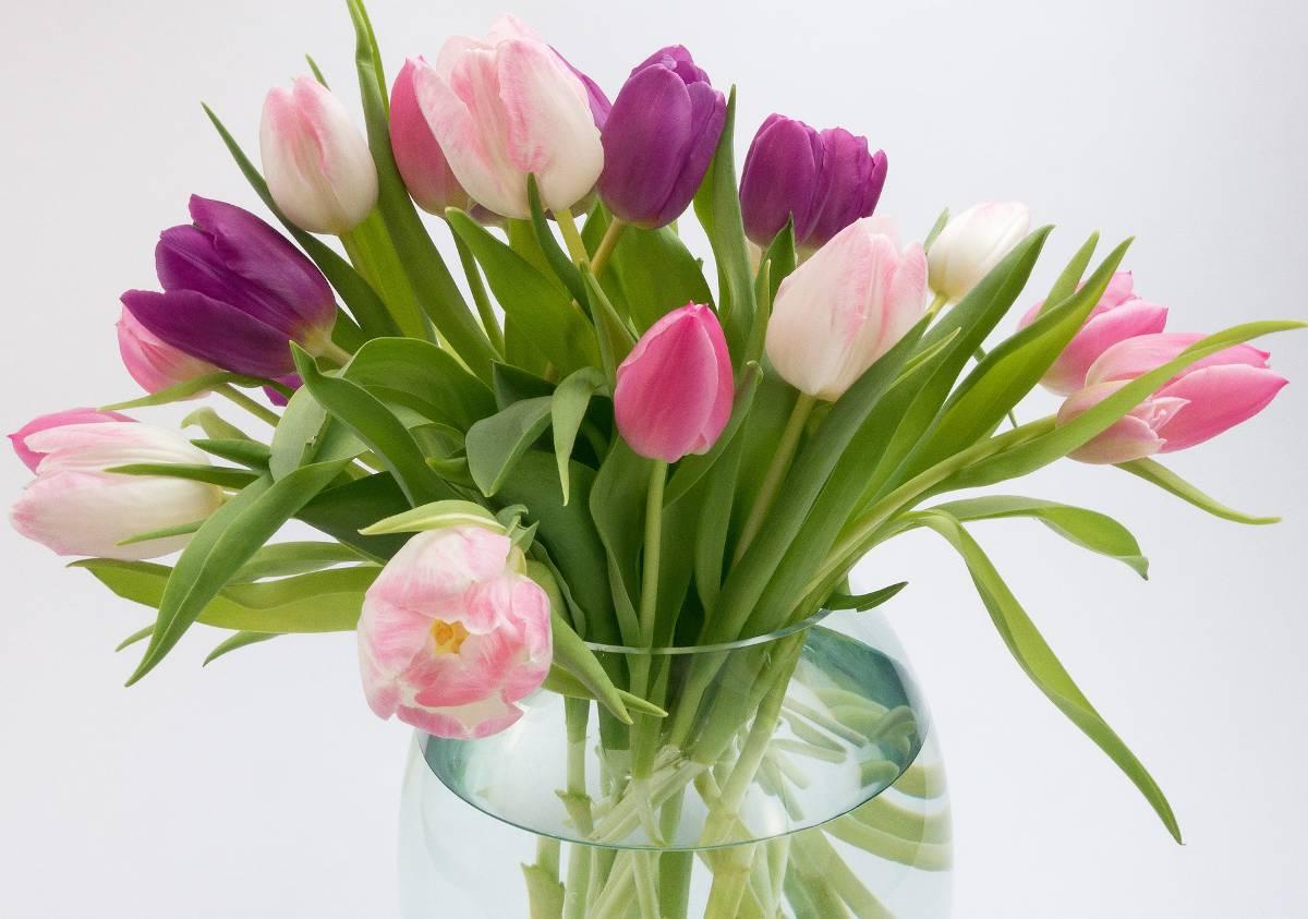 faire durer bouquet tulipe en vase