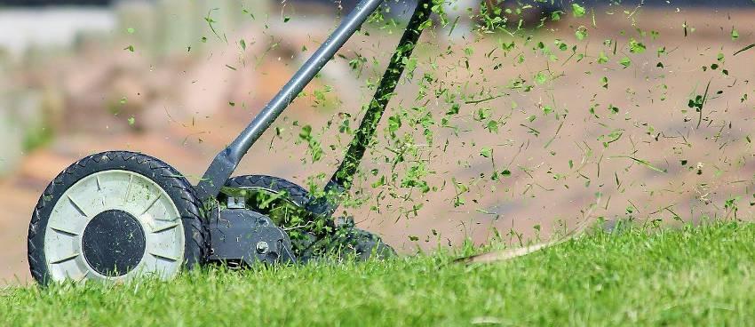 mulching avantage bienfaits pelouse