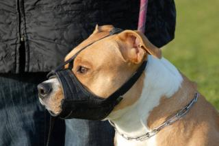 museliere obligatoire chien categorie 1 2
