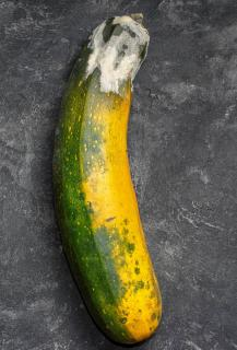 Courgette qui moisi - Botrytis pourriture