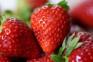Fraisier Charlotte fraise variete