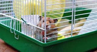 Hamster dore cage