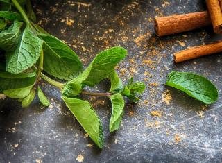 Mentha spicata cuisine menthe
