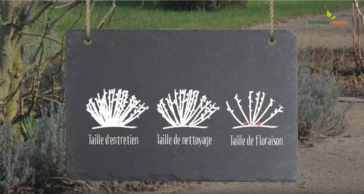 Jardiner Malin Calendrier Lunaire 2021 Taille de la lavande : technique et période (+ conseils en vidéo)