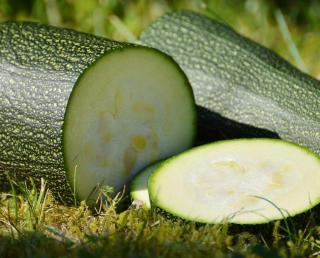 recolter graine courgette comment quand