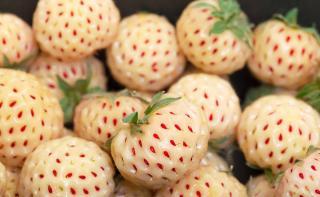 variete fraise blanche fraisier White Pineberry