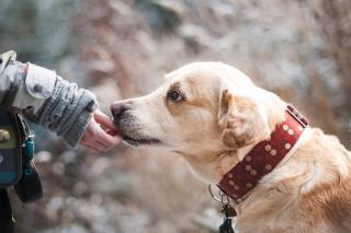vermifuger chien obligation obligatoire