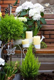 Arbuste pour balcon terrasse nord sans soleil